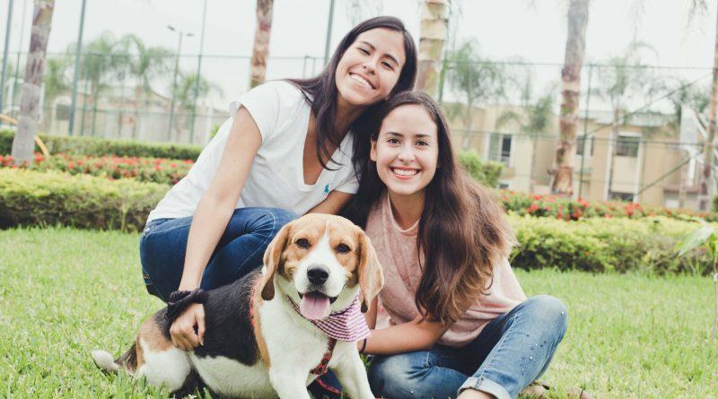 IMG 4504resize 2 800x445 - Una mascota te hace feliz